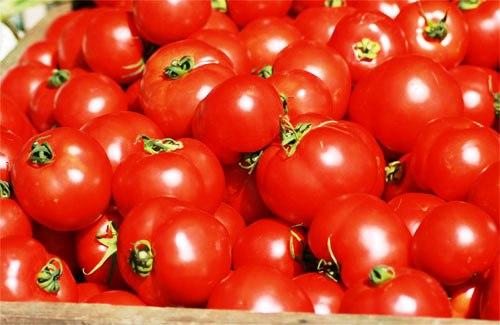 Procura obtener tomates frescos para la receta
