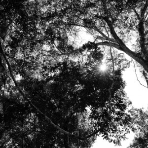 castagno bosco 6199