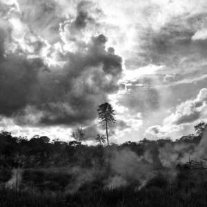 castagno incendio IMG_7698