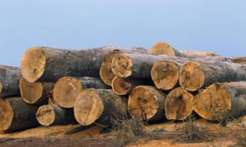 madera_16
