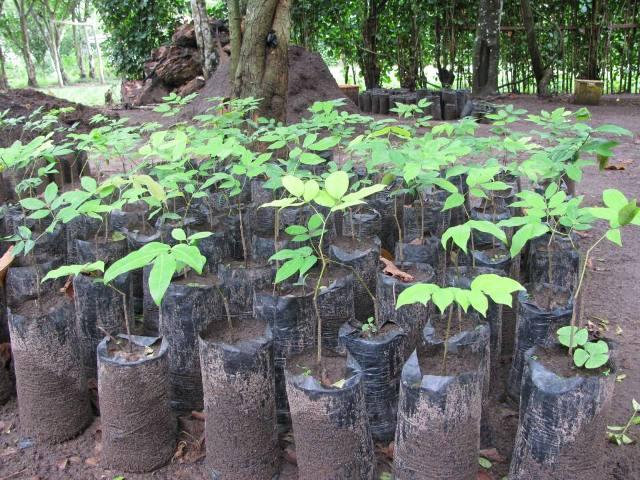 Reforestacion  (1)