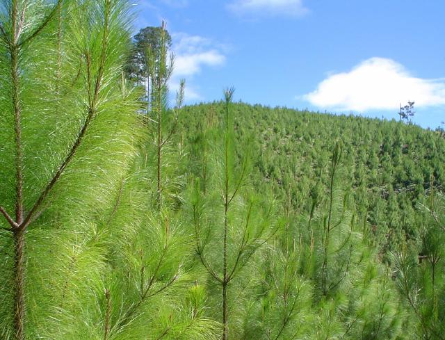 Reforestacion  (3)